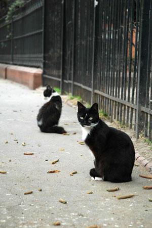La decreciente población de gatos en el Parque Lezama Foto: Constanza Gnecco